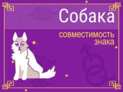 Совместимость знака Собака
