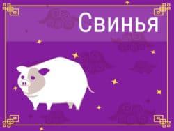Свинья в Китайском гороскопе