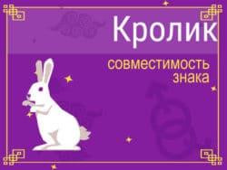 Совместимость знака Кролик