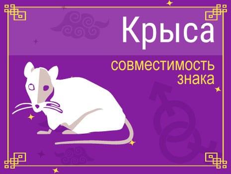 ЗСовместимость знака Крыса